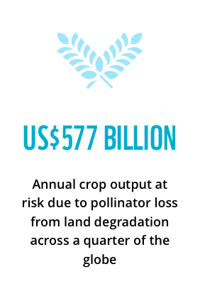 US$577 billion: annual crop output at risk due to pollinator loss from land degradation across a quarter of the globe