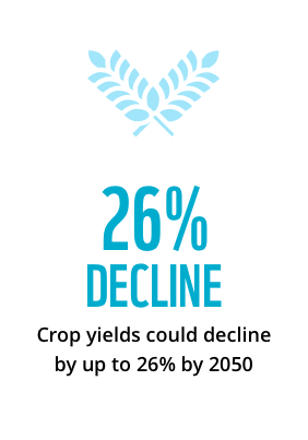 Crop yields could decline by up to 26% by 2050