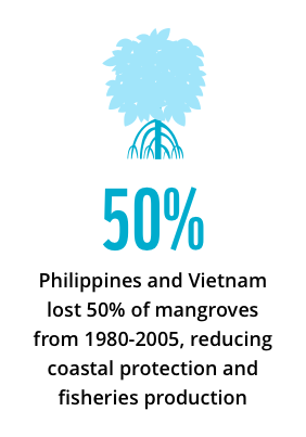 Philippines and Vietnam lost 50% of their mangroves between 1980 and 2005, reducing coastal protection and fisheries production