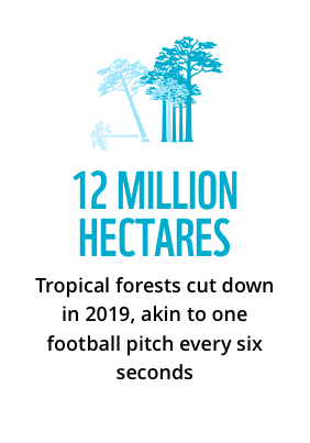 12 million hectares: tropical forests cut down in 2019, akin to one football pitch every six seconds